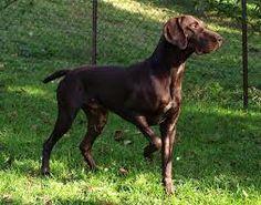 Ezt a kutya úgy hívják hogy Inez !