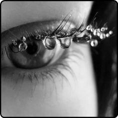 dew drops…