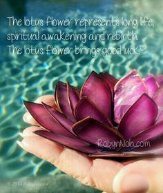 """The lotus flower grows in muddy water and rises above the surface to bloom with remarkable beauty. At night the flower closes and sinks underwater, at dawn it rises and opens again. Untouched by the impurity, lotus symbolizes the purity of heart and mind Lotus Flower Symbolism, Lotus Flowers, Lotus Flower Buddhism, Lotus Flower Meaning, Spiritual Awakening, Spiritual Quotes, Buddhist Quotes, Wealth Affirmations, Flower Quotes"