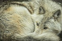 Canadian Geographic Photo Club - Tucked In!