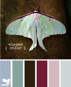 Winged Color
