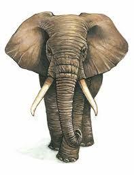 """Résultat de recherche d'images pour """"elephant dessin de face"""""""