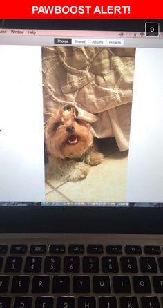 Please spread the word! Choco was last seen in Pico Rivera, CA 90660.  Description: Choco is a golden light brown Female Maltese terrier mix. Two years of age. About 10 pounds.  She is a very sweet loving pet and very people friendly. She loves her home and misses sleeping in her bed next to her owner. Her beagle sister penny that misses her dearly needs her back home with her. Please help Choco find her home.