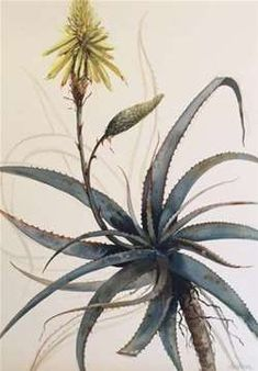 The Artists | Elizabeth Gordon Gallery Flower Images, Flower Art, Art Flowers, Scenic Wallpaper, South African Art, Watercolor Paintings, Art Paintings, Painting Patterns, Botanical Art