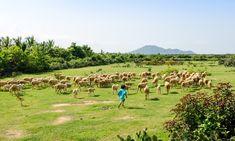 Trại Cừu An An Ninh Thuận