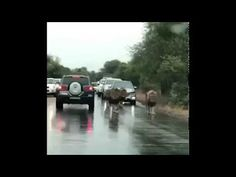 Traffic in Africa. Planets, Places To Visit, Africa, World, Amazing, Youtube, The World, Youtubers, Youtube Movies