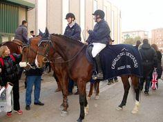 La Forestale promuove il Cavallo del Ventasso Brown Bodies, Horse Breeds, Black And Brown, Colours, Horses, Copper, Europe, Italy, Animals
