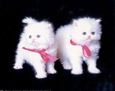 My grandmother got me a stuffed animal kitten that looks exactly like this one, pink bow and all!!