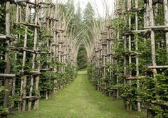 The Cattedrale Vegetale (also known as the Tree Cathedral) sits at the foot of Mount Arera on the outskirts of Bergamo in northern Italy. It was created by artist Giuliano Mauri.