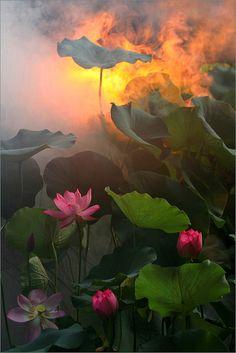 ~~Surreal Lotus Flower by Bahman Farzad~~