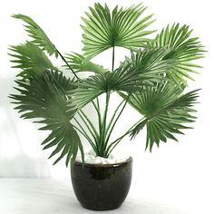 mini-palmeira-leque