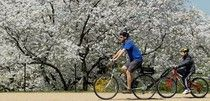 Cruising on a bike is lots more fun than that endurance stuff. And Spring is the perfect time!  #examinercom