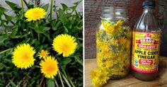 24 Little-Known Uses for Dandelions From Baking and Pain Relief to Quickly Removing Warts | Healthyfoodtipsandtricks
