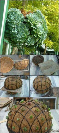 Succulent balls, awesome for a porch or wedding décor! www.designhump.com