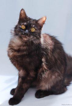 Сумерки — Animalsburg.ru Анималсбург #кошка  #кошкаищетдом  #котенок  #котенокищетдом #котенокищетхозяина