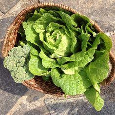 Napa Cabbage & Broccoli