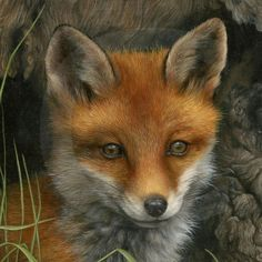 Wildlife Paintings by Carl Whitfield