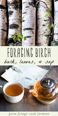 Foraging and Using Birch: Bark, Leaves, & Sap Birch trees have many edible and medicinal uses and are great to forage for! Learn how to harvest and use birch bark, leaves, and sap. Healing Herbs, Medicinal Plants, Herbal Remedies, Natural Remedies, Health Remedies, Natural Treatments, Holistic Remedies, Holistic Healing, Ayurveda