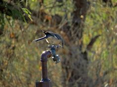 bird on faucet 2