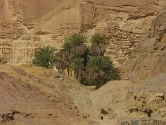 A small oasis in southern Sinai, Egypt by artour_a, via Flickr