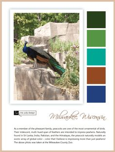 Wildlife influence: An exotic multi-hued color palette built by referencing a peacock. Location: Milwaukee, Wisconsin -mejudydesign.com