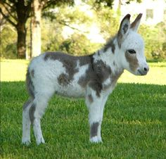 Miniature Mediterranean donkey That.s 1 cute donkey Baby Donkey, Cute Donkey, Mini Donkey, Baby Cows, Baby Elephants, Cute Baby Animals, Farm Animals, Animals And Pets, Funny Animals