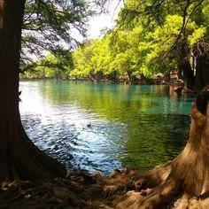Parque Nacional Lago Camécuaro esta rodeado por ahuehuetes. #camecuaro #michoacan #mexico (en Parque Nacional Del Lago De Camecuaro)