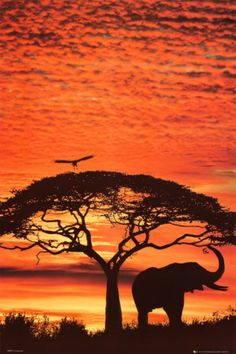 http://www.allposters.com/-sp/African-Sunset-Posters_i3365065_.htm