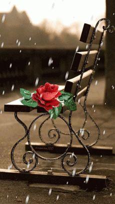 Faati♥..Flower shower