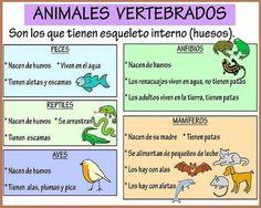 Resultado de imagen de juegos para niños clasificación vertebrados invertebrados