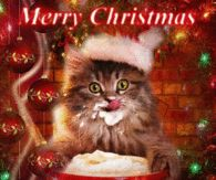 ideas for funny christmas pictures humor kitty Funny Baby Bibs, Funny Babies, Funny Kids, Funny Cute, Christmas Animals, Christmas Cats, Christmas Humor, Funny Mom Quotes, Funny Quotes For Teens