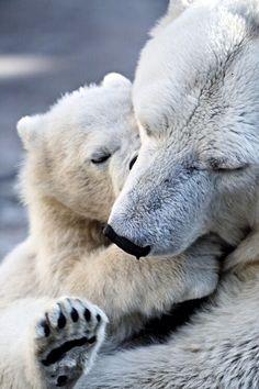 Polar bears...too much cuteness