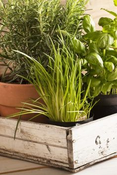 If you're looking for a way to take your cooking to the next level, growing your own herbs is a great way to start. Popular herbs like basil, cilantro, and oregano have an amazing fragrance and taste when grown fresh at home. Spices And Herbs, Fresh Herbs, Easy Plants To Grow, Parts Of A Plant, Grow Your Own, Cilantro, Basil, Roots, Berries