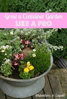New to container gardening? This post will give you the tips and tricks you need to learn how to container garden like a pro! Lawn And Garden, Garden Pots, Vegetable Garden, Garden Ideas, Gardening For Beginners, Gardening Tips, Patio Planters, Growing Herbs, Interior Exterior