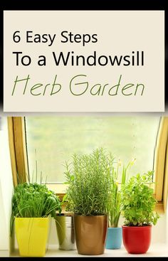 It's easy and anyone who have lack of space or want to grow herb indoors can create a mini herb garden that grows on a window sill. Here are 6 basic steps to follow to make it possible.