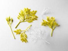 Conceptual flowering plant series 2013 by Jess Dare