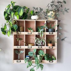 unexpected ways to decorate with houseplants, . 17 unexpected ways to decorate with houseplants, 17 unexpected ways to decorate with houseplants, Decoration Hall, Decoration Entree, Decoration Plante, Diy Flower Boxes, Diy Flowers, Indoor Plant Shelves, Indoor Plants, Plantas Indoor, Jungle House