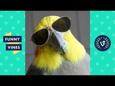 Teach Your Parrot to Go through a Ring | Parrot Training - YouTube