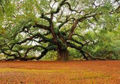 Die besten 100 Bilder in der Kategorie baeume: Der Baum unter den B?umen