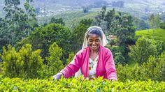 Rejser til Sri Lanka | Fantastisk rundrejse med privat chauffør