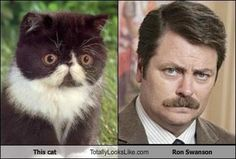 Cats+That+Look+Like+Celebrities | ... has become its own meme check out cats that look like ron swanson for