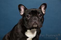 Hondenfotograaf Amsterdam - PetPlan Winner actie - Honden op de Winnershow-9