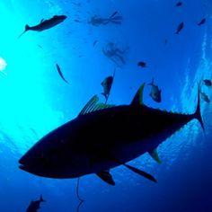 Fishing Friday | Vol. 31 (20 Pics) - petercorreale