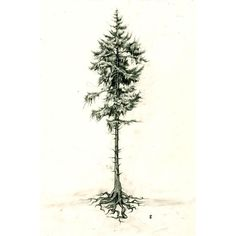 Pine Tree- tattoo idea. I like showing the roots