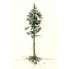 Pine Tree- tattoo idea. I like showing the roots