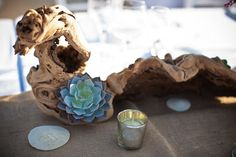 Driftwood, sand dollars, cactus (substitute a big blue flower), and a candle. Great centerpiece.
