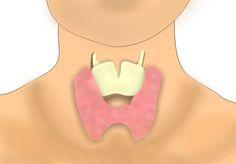 Vplyv štítnej žľazy na hmotnosť organizmu. Štítna žľaza je veľmi dôležitý, pre organizmus nevyhnutný orgán. Produkuje hormóny, ktoré ovplyvňujú…