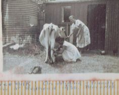 """Peg Bell and friend milking a cow in """"Bell's cow paddock (photo courtesy Maxine & Richard Bell) Rosedale NSW Australian Bush, Make Do And Mend, Great Depression, Historical Photos, 1920s, Sydney, Cow, Buildings, Europe"""