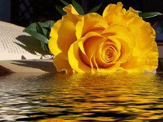 Mensagem do Dia: Arrependei-vos, porque é chegado o reino dos céus ...