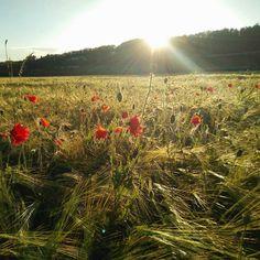 #print jetzt deine schönsten #momente auf ein #poster von @socialprint.ch!  #nature #zug #switzerland #swiss #swisstravel #swissplace #fotos  #swisspanorama #schweiz #visitswitzerland #myswitzerland #instaprints #memories #socialmedia #instapic #socialprint #fotogeschenk #printyoursociallife #collage #reise